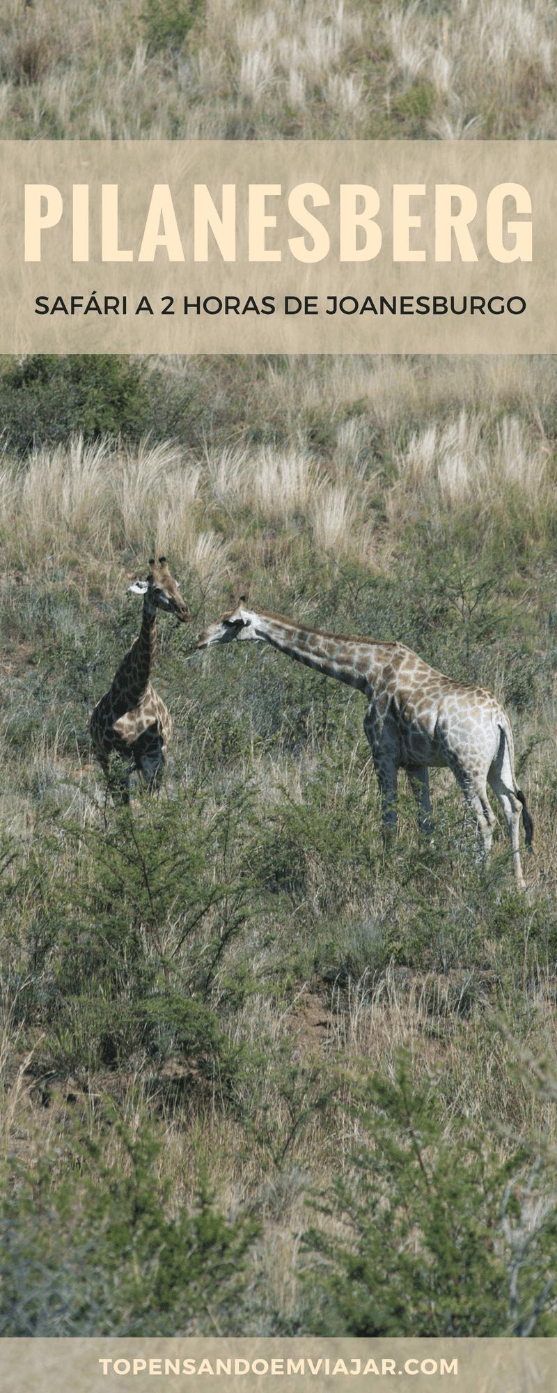 O PIlanesberg Park é a melhor opção para quem tem pouco tempo na África do Sul e quer fazer um safári perto de Joanesburgo. Localizado a apenas 2 horas de Joburg, você pode fazer um bate e volta ou ficar hospedado em um dos lodges no Pilanesbeg. O parque é uma reserva Big 5 e malária free!