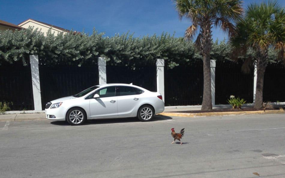 Galinha cigana nas ruas de Key West