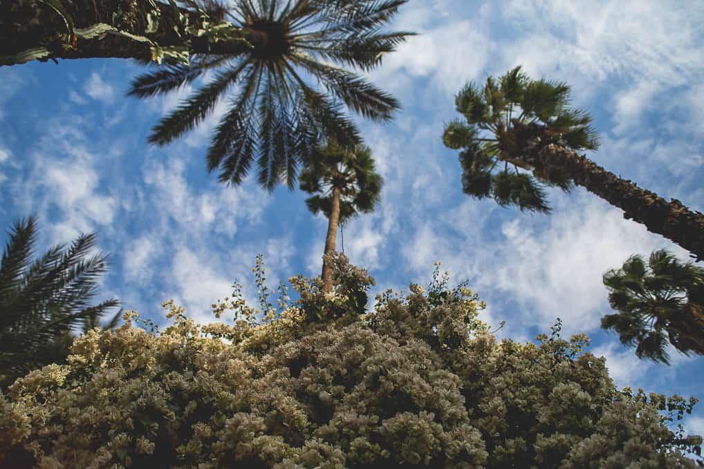 Jardim de Majorelle em Marrakech, Marrocos