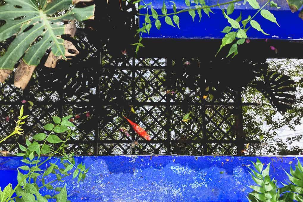 Visita ao Jardim de Majorelle