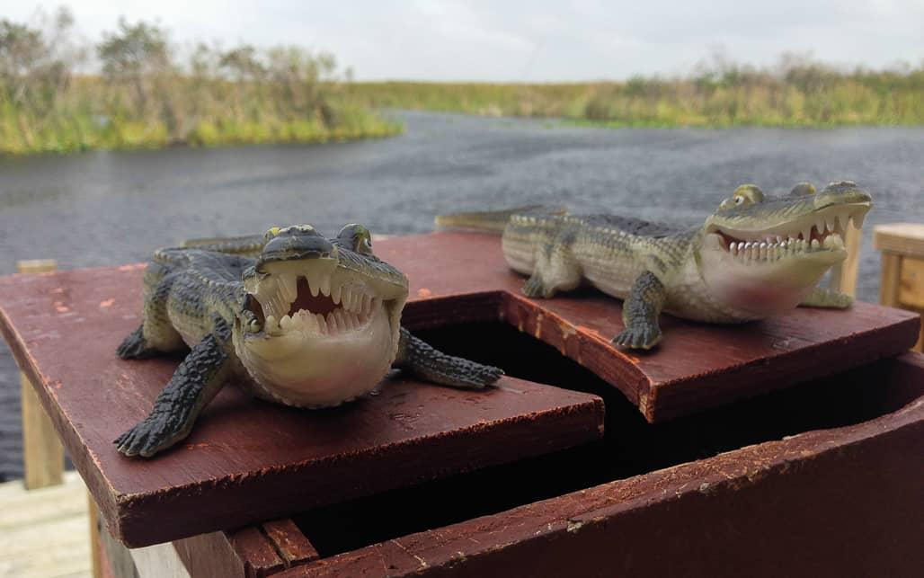 Everglades_05