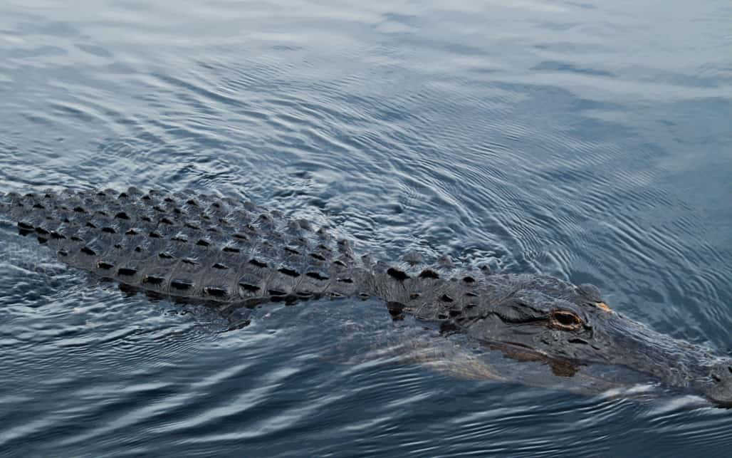 Everglades_05b