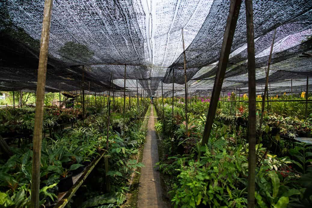 bangkok-thonburi-orchid-farm-01