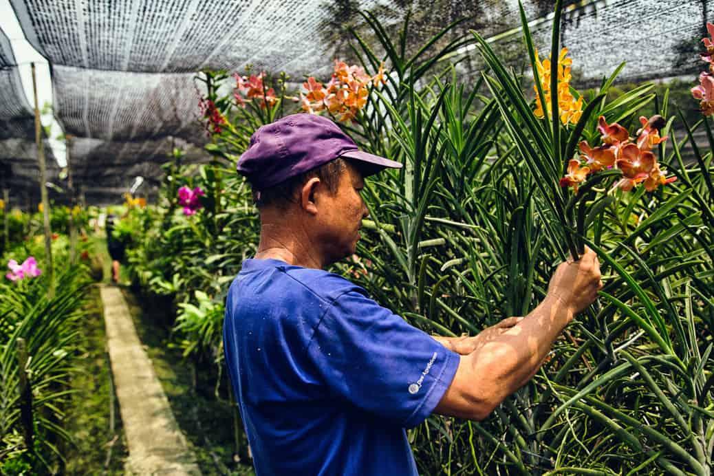 bangkok-thonburi-orchid-farm-05