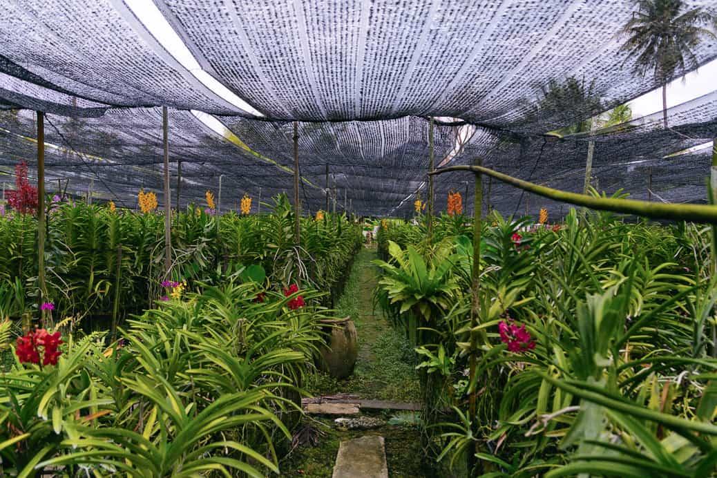 bangkok-thonburi-orchid-farm-09