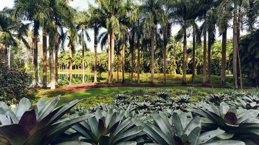 inhotim-jardim-verde