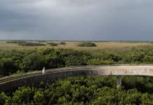 Shark Valley: Everglades perto de Miami