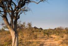 Dicas de onde ficar no Kruger Park