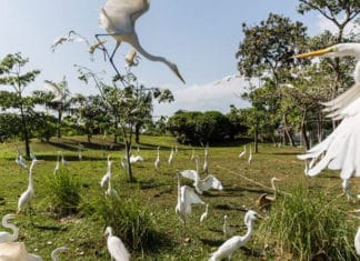 Mangal das Garças: passeio imperdível em Belém do Pará