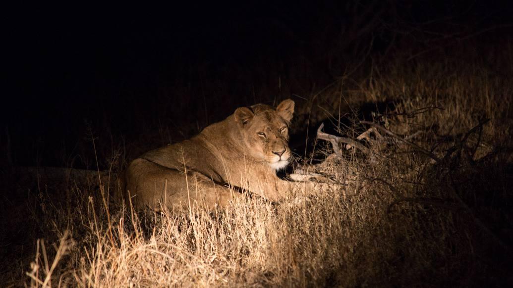 Dicas de fotografia para um safári na África do Sul