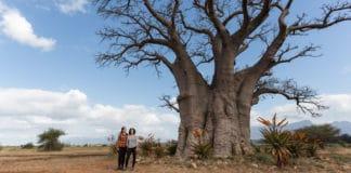 Procurando um baobá na África do Sul
