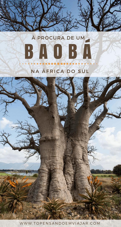 Siga as dicas do Tô Pensando em Viajar para encontrar um baobá na África do Sul, uma das árvores mais antigas do planeta Terra!