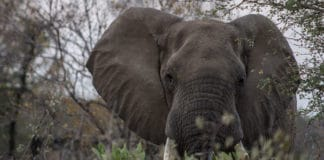 Dicas de fotografia para safári na África do Sul
