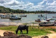 Onde ficar na Ilha de Marajó: Soure ou Salvaterra?