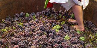 Dicas para curtir a 36a Festa da Uva de Jundiaí 2019
