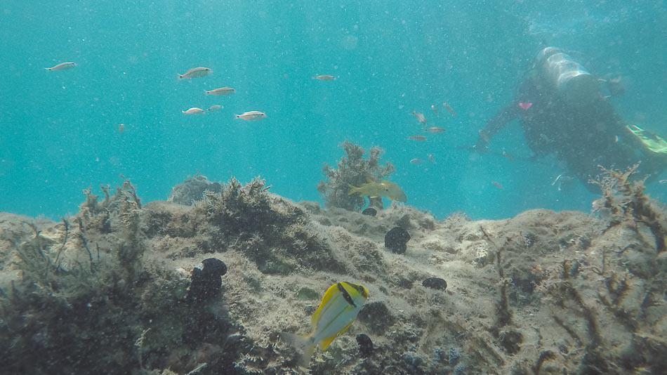 Mergulho em trilha subaquática na Flórida