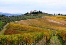 Vinhedo na região do Chianti, na Toscana, Itália