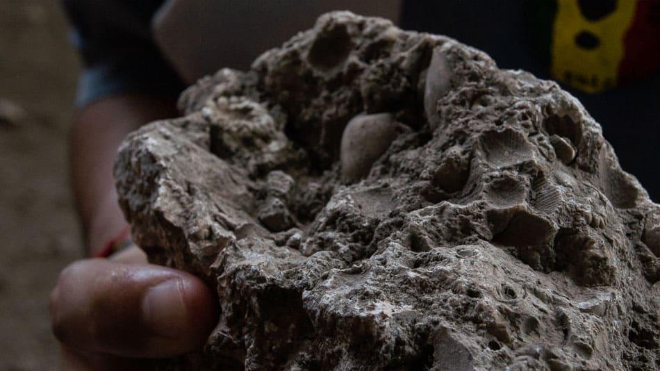 Fósseis marinhos em Loíza, Porto Rico