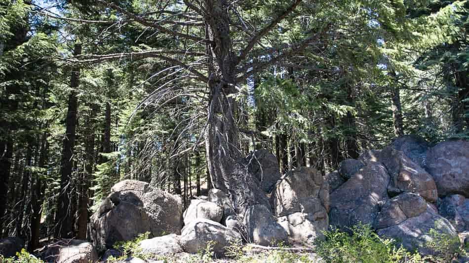 Local para meditação no Mt. Shasta, no norte da Califórnia