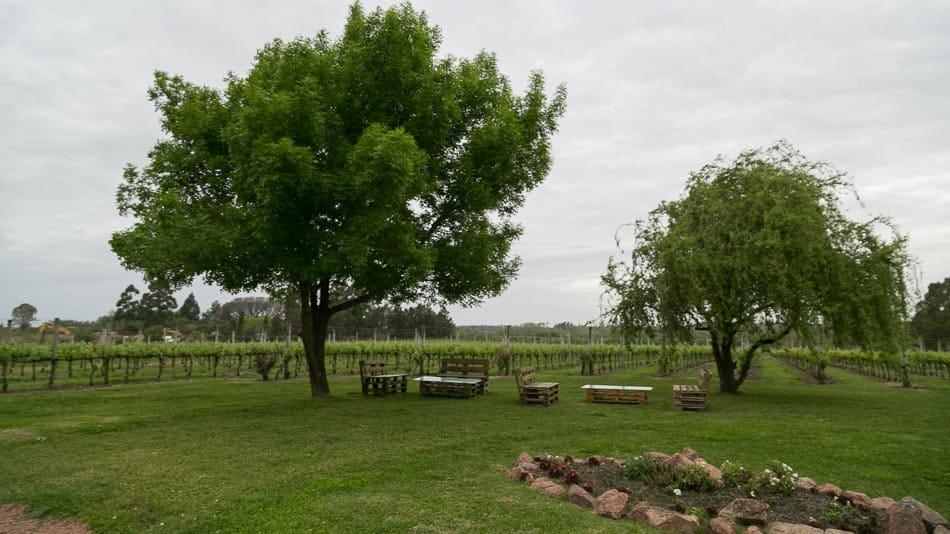 Vinícolas no Uruguai: Antigua Bodega