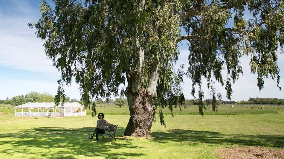 Vinícolas no Uruguai: Campotinto