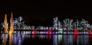 O que fazer em SP em dezembro: luzes de Natal no Ibirapuera