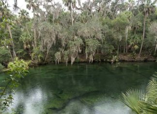 Blue Spring State Park, em West Volusia