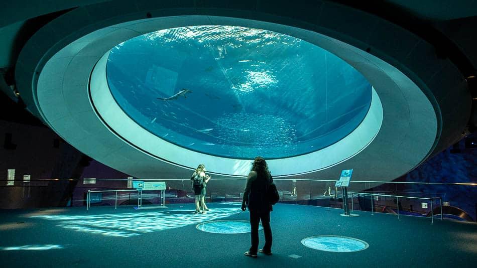 Dica de museus em Miami: Frost