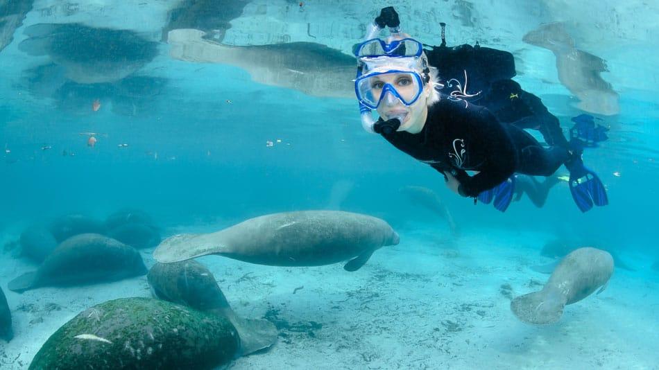 Mergulho com peixes-boi na Flórida