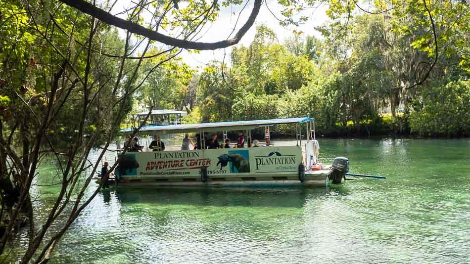 Passeio de barco para nadar com peixes-boi em Crystal River