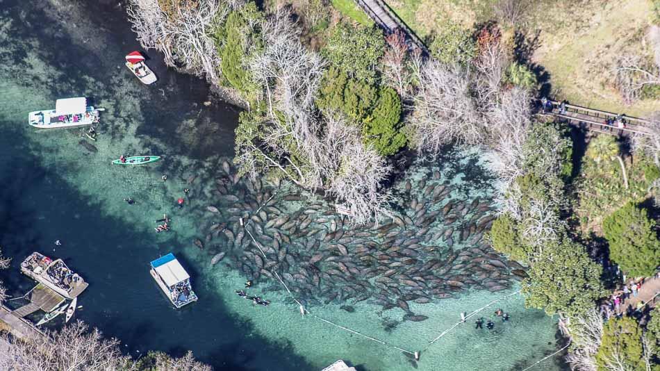 Three Sister Springs: refúgio para peixes-boi na Flórida