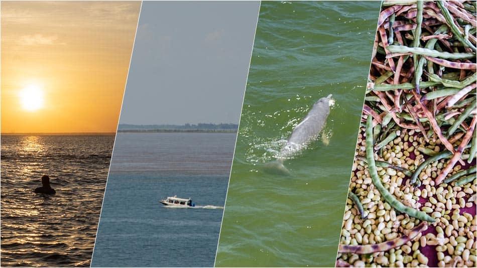 As melhores dicas de o que fazer em Santarém, no Pará