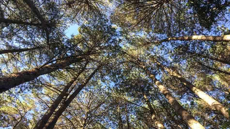 Onde ficar em Monte Verde perto da natureza