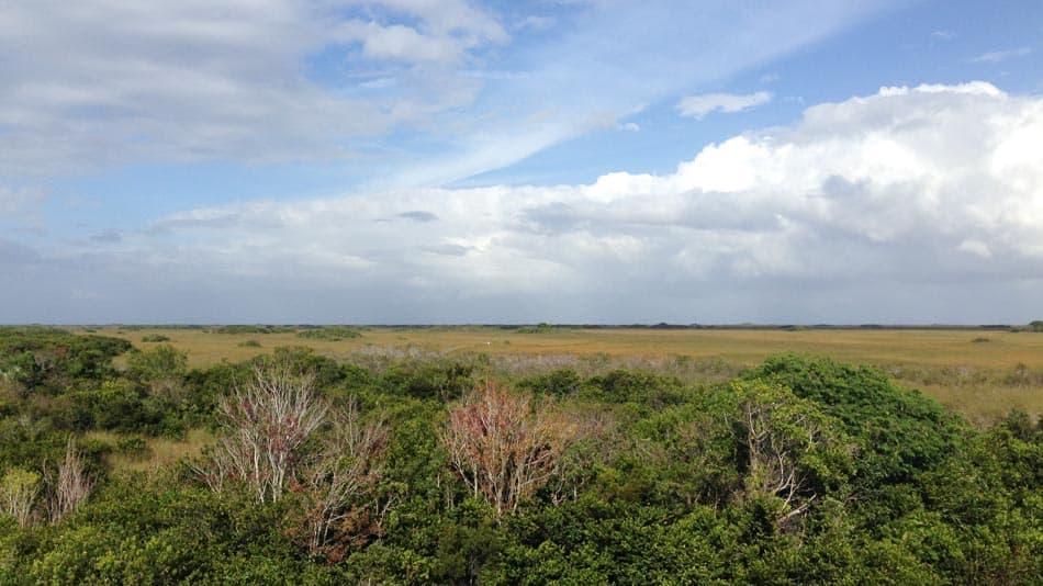 Paisagem no Everglades National Park