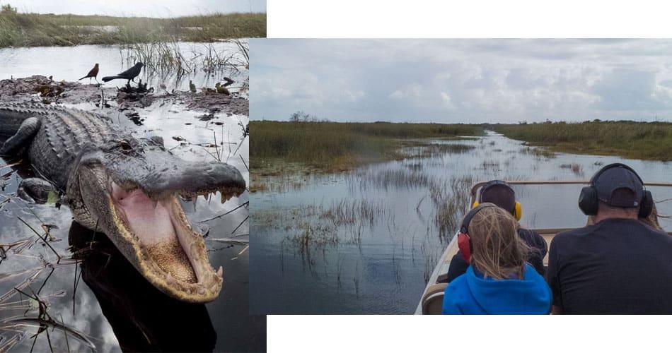 O que fazer na Flórida: passeio de airboat nos Everglades