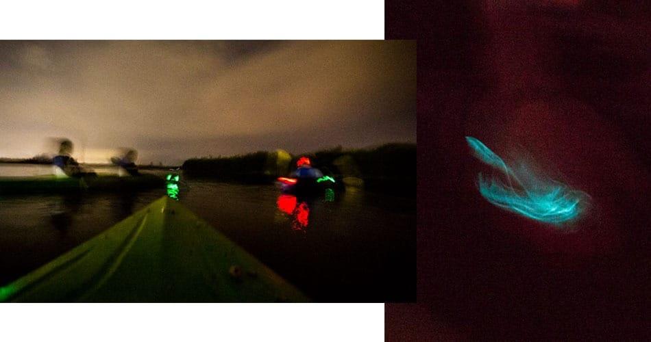 O que fazer na Flórida: ver bioluminescência