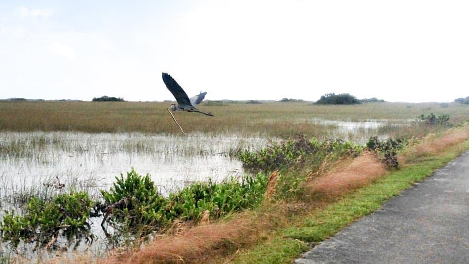 O que fazer na Flórida: visitar os Everglades