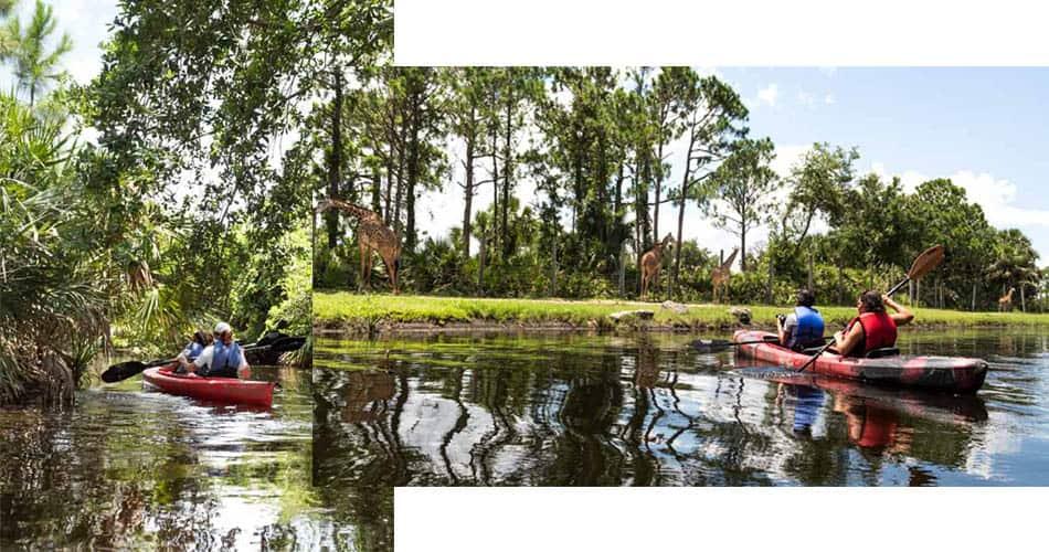 O que fazer na Flórida: visitar zoológico de caiaque