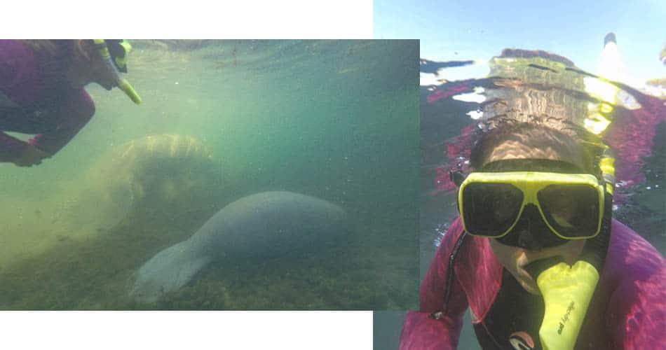 Mergulho com peixe boi em Crystal River perto de Orlando